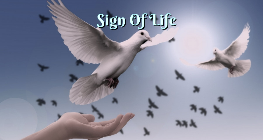 Sign Of Life Testimony Cover Image